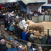 Lot 7. 4,600 gns.