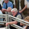 Kendal Sheep sale010