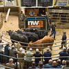 Sale of beef breeding and store cattle.<br /> The reserve champion pen of bullocks, four 26 to 28 month old continental crosses from D. E. and S. M. Moorhouse of Natland, Cumbria sold for £1,440 per head.