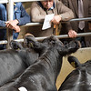 Sale of beef breeding and store cattle.
