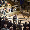 Sale of beef breeding and store cattle.<br /> Lot 38.
