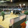 Market Drayton-3675
