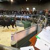 Market Drayton-3630