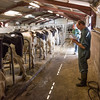 Mold Dairy Sale F012