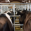 Mold Dairy Sale F020