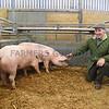 Newark champ pigs
