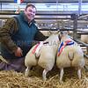 Newark Xmas lambs