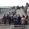 Ref Theresa Photo Arvid Parry Jones. ( Pic 1 ).<br /> Brightwells Refurbished Rhayader Livestock Market, Mid Wales. Sale of 1500 fat lambs. <br /> New sheep pens recently installed.