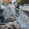 Ref Theresa Photo Arvid Parry Jones. ( Pic 11 ).<br /> Brightwells Refurbished Rhayader Livestock Market, Mid Wales. Sale of 1500 fat lambs. <br /> Dealers and farmers.