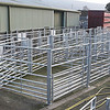 Ref Theresa Photo Arvid Parry Jones. ( Pic 4 ).<br /> Brightwells Refurbished Rhayader Livestock Market, Mid Wales. Sale of 1500 fat lambs. <br /> New outdoor cattle pens recently installed.