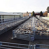 Ref Theresa Photo Arvid Parry Jones. ( Pic 2 ).<br /> Brightwells Refurbished Rhayader Livestock Market, Mid Wales. Sale of 1500 fat lambs. <br /> New sheep pens recently installed.
