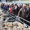 Ref Theresa Photo Arvid Parry Jones. ( Pic 10 ).<br /> Brightwells Refurbished Rhayader Livestock Market, Mid Wales. Sale of 1500 fat lambs. <br /> Dealers and farmers.