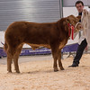 The reserve supreme champion, a Limousin cross steer from David John Lloyd and Co. of Cefn Barrach, Trefseglwys, Caersws sold for £6,000.