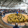 50 Suffolk cross ewe lambs from Nesbit farms sold for £108 per head.