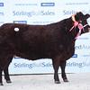 Stirling Saler female