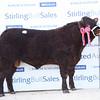 Stirling Saler champ