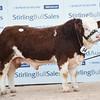 Stirling Sim 17,000