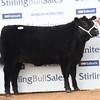 Stirling female 7,500