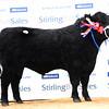 Stirling AA champ