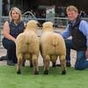 The champion pair. Ram lambs.