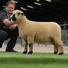 Top price female.1,000 gns.