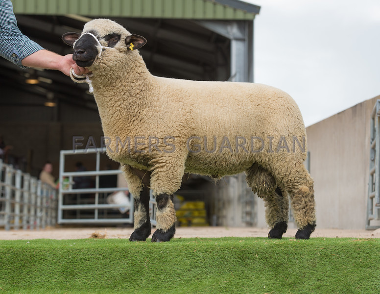 The top price at 1,6000 gns. A ram lamb from Mr. and Mrs. J. Birkwood.