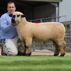 The ram lamb champion.
