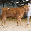 The reserve female champion, Brettles SAS Gypsy Belle 6 from Mr. and Mrs. Rushbrooke of Shatterford, Bewdley, Worcestershire sold for 1,050 gns.