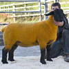 Beeston Lamb