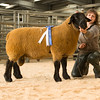The reserve champion Suffolk, a yearling ram from J. Pryce of Prenafal, Trefnanney sold for 850 gns.