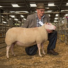 The champion Charmoise Hill, a 3 year old ewe from J. and R. Powell sold for 400 gns.