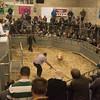 Selling Texel sheep.