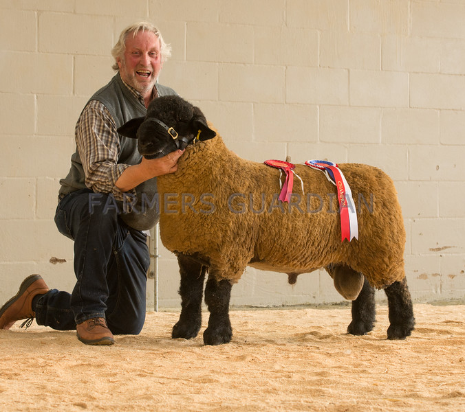 The champion Suffolk, a ram lamb from P. W. Poole of Shrewsbury, Shropshire.