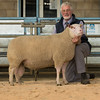 The top price of 800 gns for a Charmoise Hill, a shearling ram from Emyr O. Roberts of Lon Wynne.