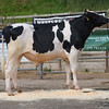 The Wexham Cup champion, Shanael Edward from Shanael Farms sold for 4,200 gns.