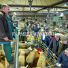 Auctioneer Peter Oven selling prime lambs.