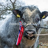 The champion bull, Norton Nightrider from Nigel Pritchard sold for 3,900 gns.