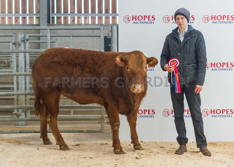 Champion a limousin heifer sold for £1220 to judge Geoff Bell Far Broom Long Marton Cumbria from Messrs Moore (Freddy Moore) Highside,Kellah, Ulverston, Cumbria