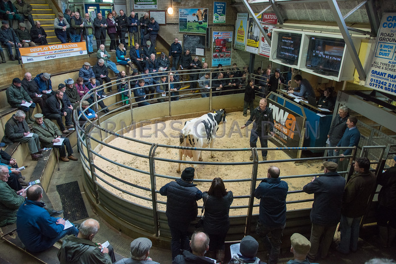 The sales top price at 2,180 gns, Bilsrow Jareb Lausine 4 from D.J. and S. Tomlinson of Preston, Lancashire.