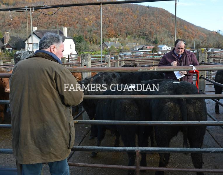 Weaned Calf Sale Knighton 13/11/18