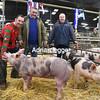 Newark pig