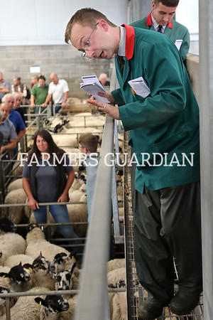 Sedgemoor sheep sale September 2018