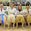 The Supreme Champion Pair of Lambs (right) and the Reserve, with handlers.