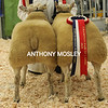 The Supreme Champion Pair of Butchers Lambs were these Charollais x Texels from Amy Pedrick of Buckfastleigh, Devon
