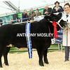 The Supreme Championship of the Show went to Lin Calcraft from Honiton, Devon for her March 2017 born Limousin cross heifer Cupid.