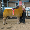 The champion Charollais, a ram lamb from R. A.  Owen of Foel, Welshpool.