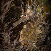 seahorse under Blue Heron Bridge