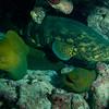 Alligator reef, Keys