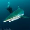 Shark dive, Jupiter, FL