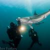 Randy Jordan calming a dusky shark, Emerald Charters.